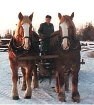 Working horses.