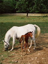 MareWithFoal