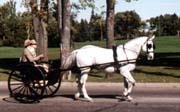 Carriage ahd horse