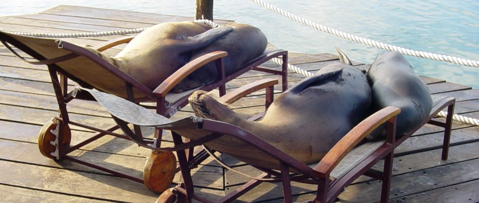 sealions_chaise2